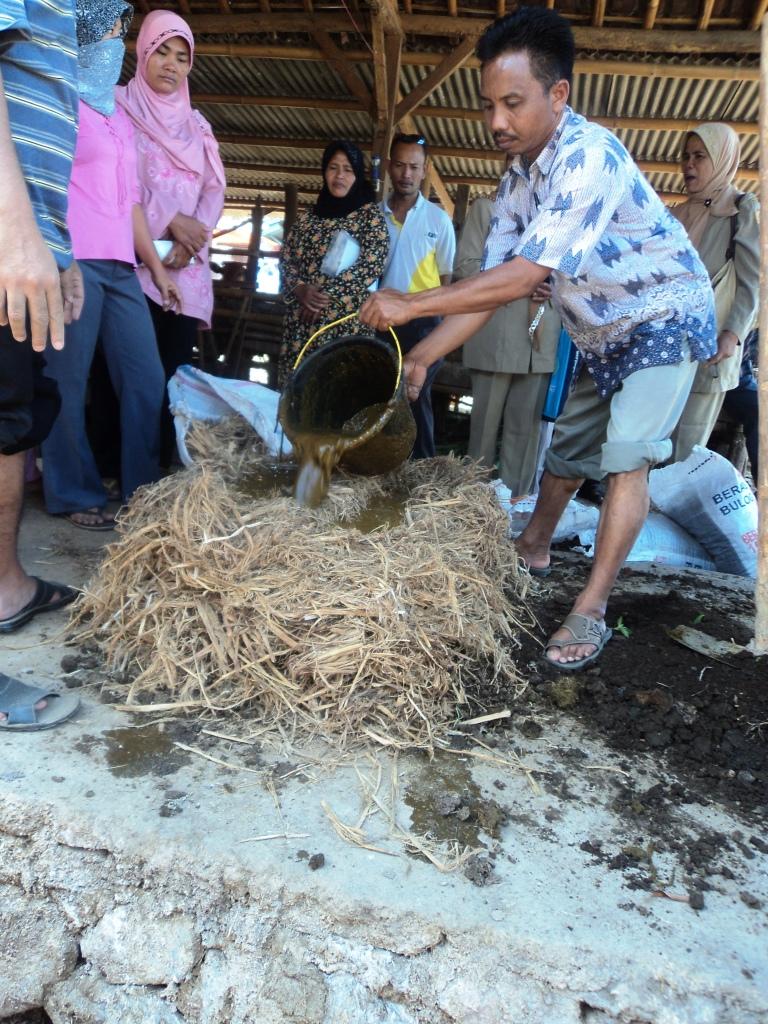 Praktek Pembuatan Kompos Tumpuk di Lombok Tengah