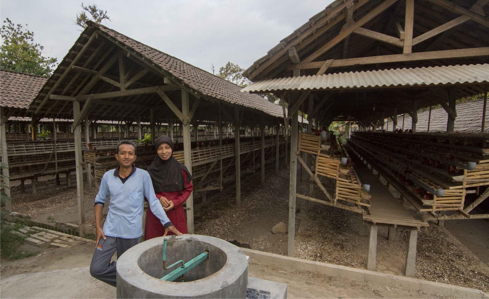 Atasi Kotoran Ayam? Biogas Solusinya!