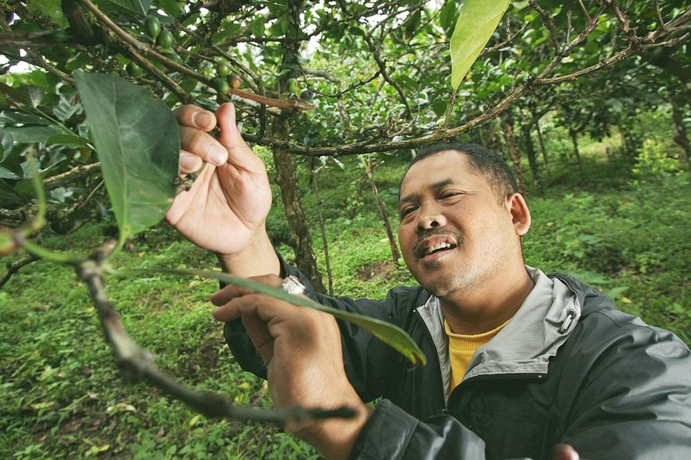 Dana Desa untuk Mandiri Energi bagi Peternak Kecil
