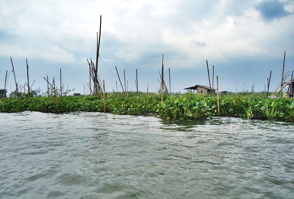 From Water Hyacinth to Biogas